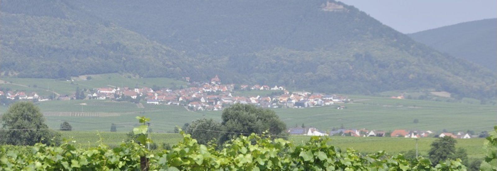 Radsportbezirk Südpfalz e.V.